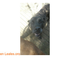 Perdidas dos perras en San Mateo - Imagen 1