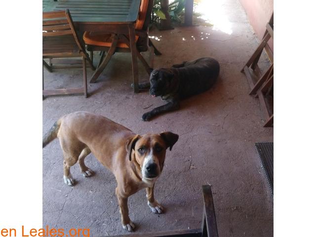 Perdidas dos perras en San Mateo - 2