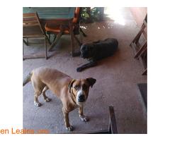Perdidas dos perras en San Mateo - Imagen 2