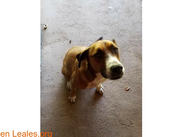 Perdidas dos perras en San Mateo - 3