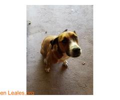 Perdidas dos perras en San Mateo - Imagen 3