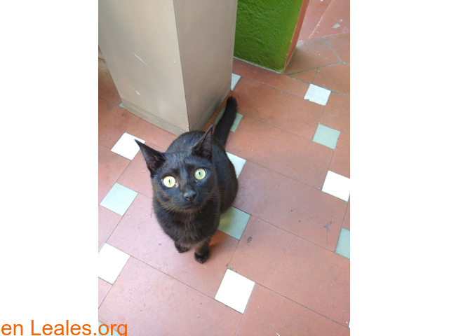 Perdida gatita negra - 1