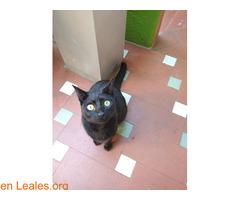 Perdida gatita negra - Imagen 1