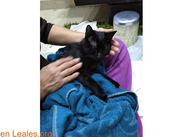 Perdida gatita negra - 2