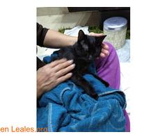 Perdida gatita negra - Imagen 2