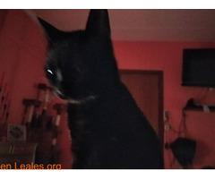 Perdida gatita negra - Imagen 3