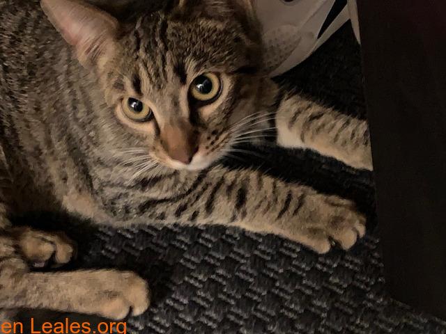 Gatito muy cariñoso - 2