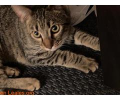 Gatito muy cariñoso - Imagen 2