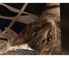 Gatito muy cariñoso - Imagen 3