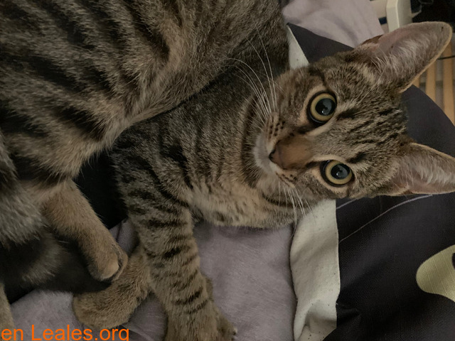 Gatito muy cariñoso - 5