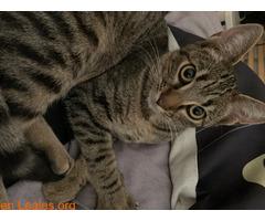 Gatito muy cariñoso - Imagen 5