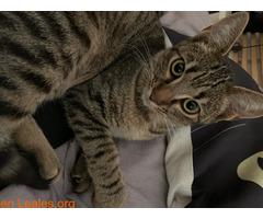 Gatito muy cariñoso - Imagen 6