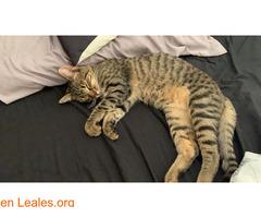 Gatito muy cariñoso - Imagen 7