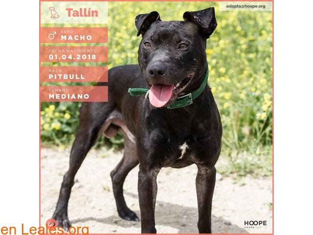 Tallin busca hogar