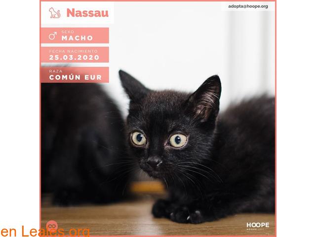 Nassau en adopción