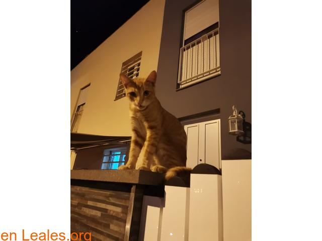 Gato encontrado - 2