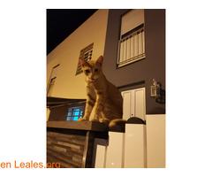 Gato encontrado - Imagen 2