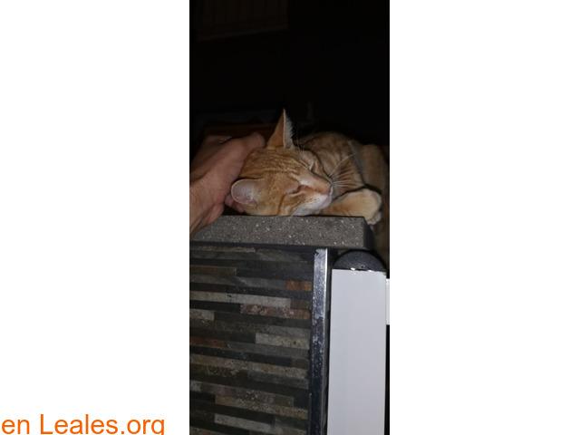 Gato encontrado - 3