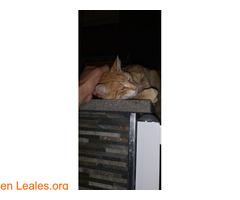 Gato encontrado - Imagen 3