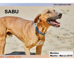 SABU - Imagen 1