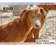 KINO - Imagen 1