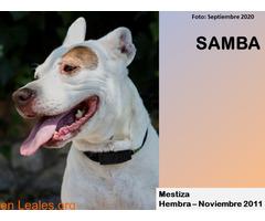 SAMBA - Imagen 1