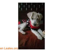 Cachorros desparacitados y esterilizados - Imagen 1