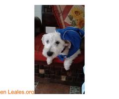 Cachorros desparacitados y esterilizados - Imagen 2