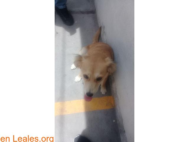Cachorros desparacitados y esterilizados - 3