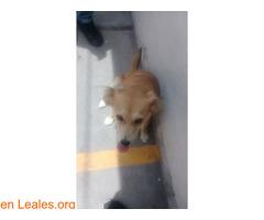 Cachorros desparacitados y esterilizados - Imagen 3