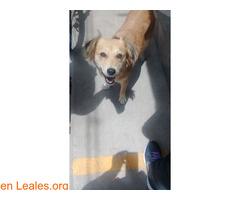 Cachorros desparacitados y esterilizados - Imagen 4