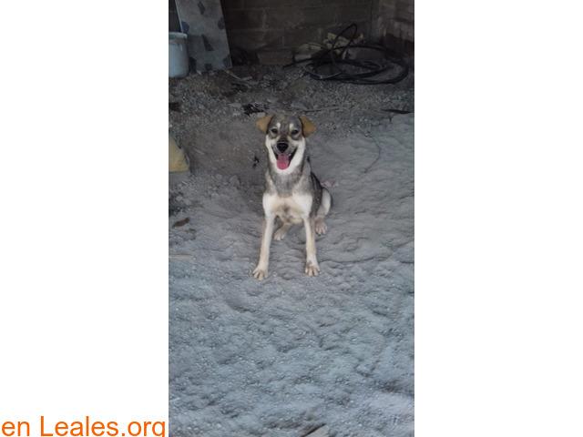 Cachorros desparacitados y esterilizados - 5