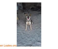 Cachorros desparacitados y esterilizados - Imagen 5
