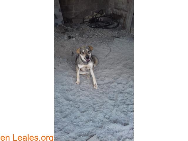 Cachorros desparacitados y esterilizados - 6
