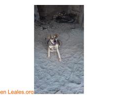 Cachorros desparacitados y esterilizados - Imagen 6