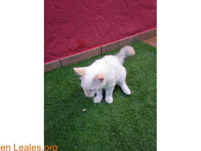Gatito encontrado en jerez - 2