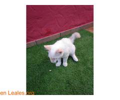 Gatito encontrado en jerez - Imagen 2