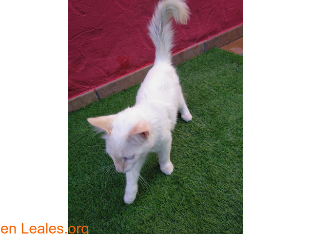 Gatito encontrado en jerez - 3