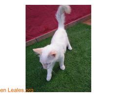 Gatito encontrado en jerez - Imagen 3