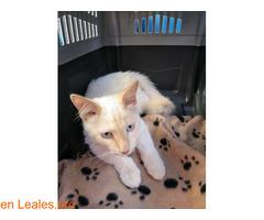 Gatito encontrado en jerez - Imagen 4