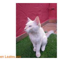 Gatito encontrado en jerez - Imagen 5