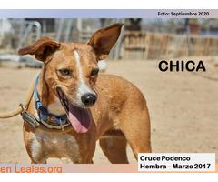 CHICA - Imagen 2