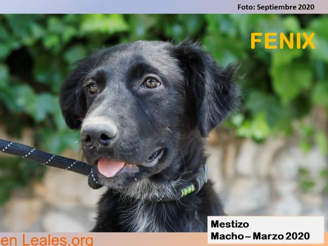 FENIX - 2