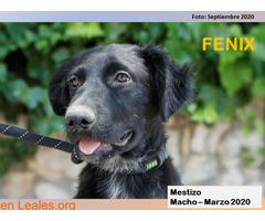 FENIX - Imagen 2