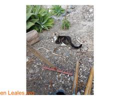 Gato de colonia felina. - Imagen 1