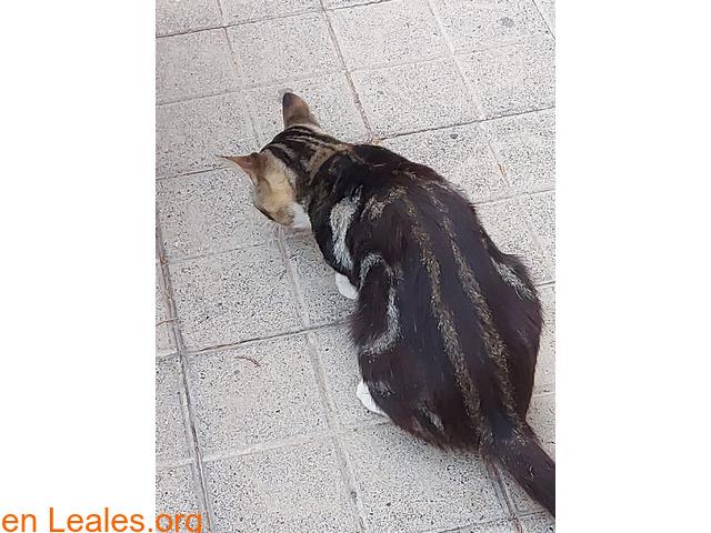 Gato de colonia felina. - 2