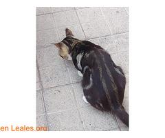 Gato de colonia felina. - Imagen 2