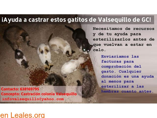 Ayudanos a castrar colonia Valsequillo  - 1