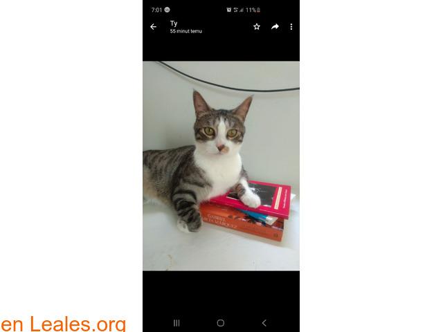 Perdido gato macho Atalaya de Santa Brig