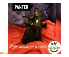 PANTER - Imagen 1